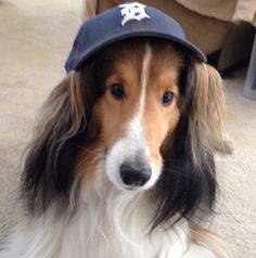 Samson -- Detroit Tigers fan.