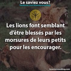 Le saviez vous ? True Facts, Funny Facts, Good To Know, Did You Know, Minion, Live Your Life, Entrepreneur Quotes, Knowing You, Affirmations