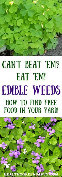 You Can Eat ~ How to Find Edible Weeds in Your Yard Is your yard overrun by dandelions? Don't despair. Enjoy the free…Is your yard overrun by dandelions? Don't despair. Enjoy the free… Healing Herbs, Medicinal Plants, Weed Plants, Natural Healing, Permaculture, Arrangements Ikebana, Edible Wild Plants, Wild Edibles, Survival Food