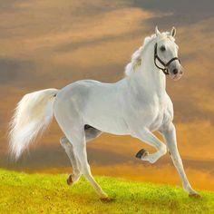 caballos, horses