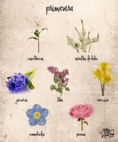 Flores de primavera                                                                                                                                                      Más
