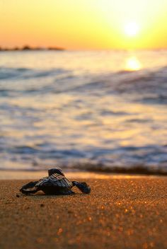 I Was Here by Tobago_Pictures, via Flickr