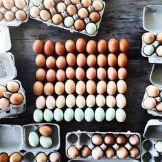 Minden napra egy tojás.