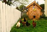 I'm loving this funky coop! Urban chicken fanciers go front and center with innovative coops - The Washington Post