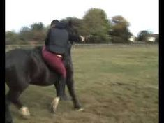 Epic Horse Riding Fail - YouTube Wearing A Hat, Latest Video, Horse Riding, Fails, Horses, Dogs, Youtube, Animals, Animales