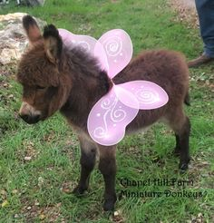 Morphle and the Farm Animals hour funny Morphle kids videos compilation) Donkey Donkey, Baby Donkey, Cute Donkey, Mini Donkey, Zoo Animals, Animals And Pets, Donkey Drawing, Miniature Donkey, Mini Farm