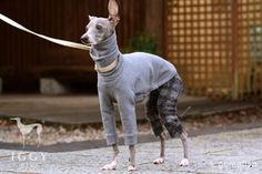 Tartancheck Pants / Grey in IGGYplus italian greyhound clothes