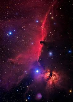 Horsehead Nebula, Coal Star, Flame and Background Emission Nebulae in Orion