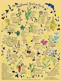 Lovely illustrated page! Might try something similar in my grimoire, especially now I've finally finished writing the herb pages :)