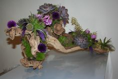 guest sign in table arrangement,Fun succulents, airplants and dramatic driftwood. www.violettaflowers.com