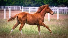Some amazing horse pictures for all the horse lovers out there #horses#horse#horselovers#horselove#lovinghorses#beautifulhorsepictures#horseriding#stunninghorses#beautifulhorses#loveforhorses#stallions#polopony#pony#whitehorses#equestrian#marwarihorse#marwari#thoroughbred#ponies#horsepictures#horsephotography#horsebackriding#LAPOLO Beautiful Horse Pictures, Beautiful Horses, Polo Horse, Pebble Beach Concours, Horse Training, Horse Breeds, Horse Photography, Classic Elegance, Thoroughbred