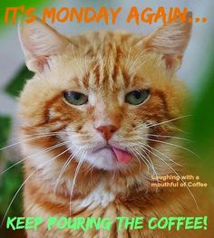 It's Monday again. Keep pouring the coffee.
