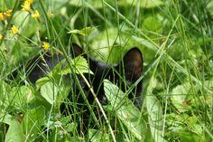 Summer-cat