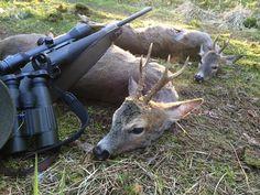 Ein wunderschöner Morgen in der Dübener Heide! Zwei Böcke konnte ich erlegen. Waidmannsheil! #jagd#jakt#hunt#chasse#caza#blaser#blaserr8#zeiss#zeissv8#rehbock#roebuck#roedeer#bockjagd#swe_hunters#germanhunt#huntsman#instachasse#jaktforlivet#3006#barnes by the.passionist