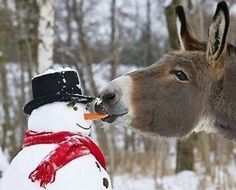 Snowman and Donkey Christmas Cards for a pack of All profits go towards the secondary spread breast cancer research funded by Against Breast Cancer. Cute Funny Animals, Funny Animal Pictures, Cute Pictures, Header Design, Funny Photo Captions, Funny Photos, Image Internet, Funny Snowman, Mini Donkey