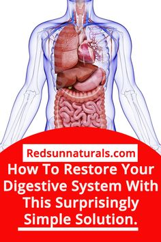 Do you feel like your digestive system isn't functioning as efficiently as it should be? Need some help finding out what are the reasons why your stomach doesn't digest food properly? What can you do to fix this problem? Check out this article if you want to know the answers! #leakygut#digestivehealth#digestivesystem#mom'shealth#healthyskin#stayyoung#Naturalbeauty