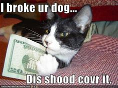 funny animal with sayings - Google Search