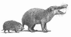 Deinogalerix, extinct fauna of European islands