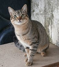 Son dos hermanos Rifi y Rafe. Sons, Animals, Kittens For Adoption, Gatos, Foot Prints, Animales, Animaux, My Son, Animal