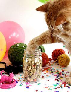 How cute!   http://assets4.designsponge.com/wp-content/uploads/2013/03/crunchy-cat-treats-DS41.jpg