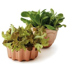 Simple Salad-Garden Containers-Make the perfect spring hostess gift or a fun centerpiece, or display your salad garden by growing plants in offbeat containers. Here, two copper gelatin molds make a dazzling impact