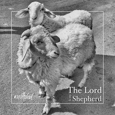 The lord is your shepherd #lord #shepherd #sheep