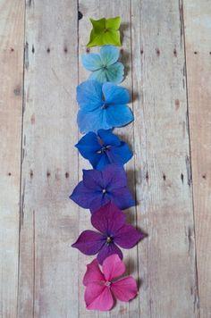 Hydrangeas petals...in real color...