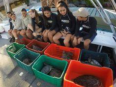 Vuelven a la Mar Doce Tortugas Marinas Rehabilitadas en Hospital de Xcaret