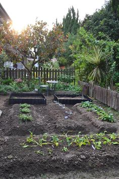 Farm Layout, Growing Vegetables, Garden Beds, Garden Bridge, Vegetable Garden, Gardening Tips, Garden Design, Backyard, Outdoor Structures