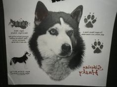 Custom Dog Breed T-Shirts Husky Doberman by NAESCUSTOMCLOTHING