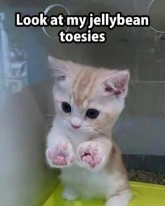 Wholesome Collection of Adorable Kitten Memes - 20 Adorable Kittens That Just W. - Wholesome Collection of Adorable Kitten Memes – 20 Adorable Kittens That Just Want To Make You S - Funny Animal Jokes, Funny Cat Memes, Cute Funny Animals, Funny Humor, Cats Humor, Funny Pics, Cat Jokes, Funny Cute Cats, Funny Cat Pictures