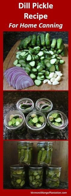 Dill Pickles Recipe For Home Canning