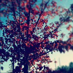 Autumn colours, trees