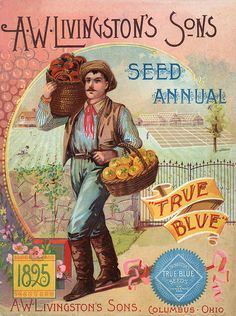 Vintage Seed Catalogue - 1895 - A.W. LIvingston's Sons Annual
