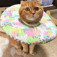 ・ メリークリスマスだにゃ〜🎄🎅💕 ・ ココたむはついにアンリッカラーGETしたにゃ🐈❤ ・ これで少しは良くなるかにゃ〜🙏💓 ・ お友達のみんにゃ、楽しいクリスマスを〜😽💖💖✨ ・ #curepetcancer #scottishfold#ネコ#猫#愛猫#cat#スコティッシュフォールド#折れ耳#cats#catsofinstagram #instacat #ilovemycat #mycat #catlove #ペット依存#고양이#cat#animal#bestmeow#ペコねこ部#にゃんだふるらいふ#スコ#スコ座り#スコ部#kitty#レッドタビー#ふわもこ部#にゃんこ