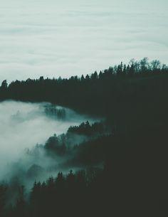 Moody forest scene. Photo from Daniel Kainz on #unsplash.