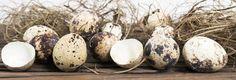 quail eggs easter concept