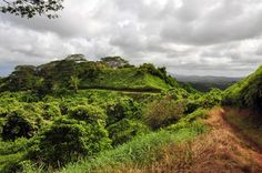This old road turned trail gently guides you up 760 feet to a glorious view of the Makaleha Mountains. At the beginning of the path you'll catch…