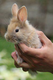 Rabbit Images Pixabay Download Free Pictures Indoor Rabbit Rabbit Hutches Rabbit