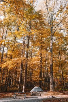 A Great Smoky Mountains campsite in fall with tall, yellow trees surrounding a picnic table
