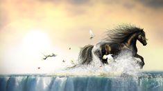 Feronia #Wallpaper http://sothyque-x.deviantart.com/gallery/38522131