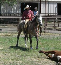 Gray Ranch Gelding for Sale - For more information click on the image or see ad # 36050 on www.RanchWorldAds.com