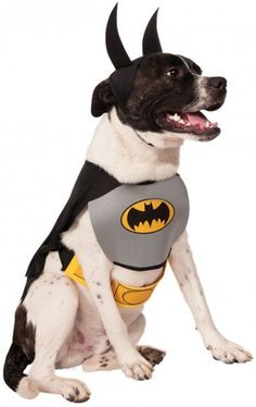 Batman Dog Costume - Large - 1 Units