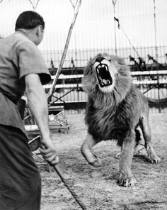 Mar. 29, 1941: A lion roared what our lion lip-readers assured us was disapproval as he paced at rehearsal. Photo: The New York Times
