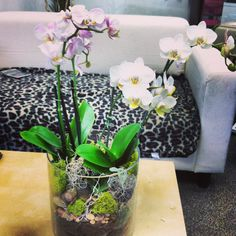 Even without drainage, you can grow and display orchids beautifully, especially with orchid bark and decorative mosses.