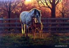 Artist Chris Cummings Unframed Horse Mare and Colt Picture Quiet Time | WildlifePrints.com