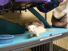 Slink is a funny guy available for adoption #givingtuesday