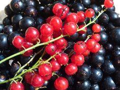 Sfaturi foarte utile pentru cultivarea coacăzelor, sfeclei roșii și usturoiului! - Retete Usoare Permaculture, Cherry, Food, Gardening, Fruits And Veggies, Plant, Essen, Lawn And Garden, Meals