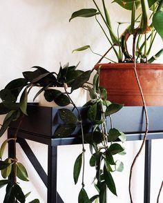 🆕 RoomGardens Terra // ENG: Just a table for your plants. GER: Einfach ein Tisch für deine Pflanzen. 🔜 www.roomgardens.de #plantlovers #monstera #urbanjungle