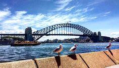 #HelloSydney #ExploringSydney #ExploringAustralia #Sydney #Australia #SydneyHarbourBridge by kyetana http://ift.tt/1NRMbNv